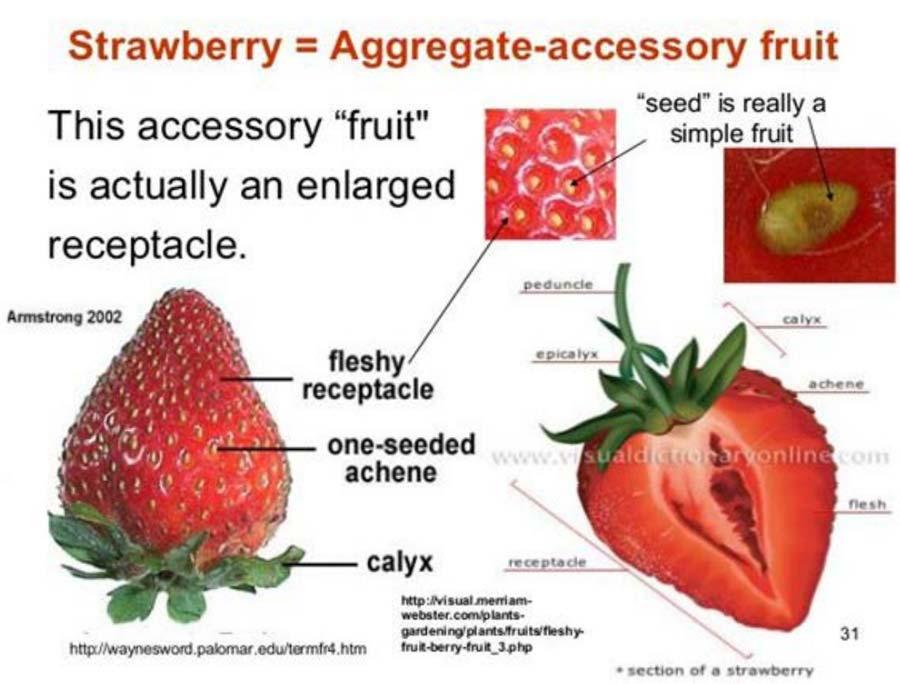 کدام یک از انواع میوه ها در طبقه بندی میوه جز میوه های مجتمع محسوب می شوند؟